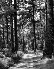 Fifield-cahil ridge trail